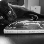 我が家の愛猫からジーンズの色落ちを学ぶ